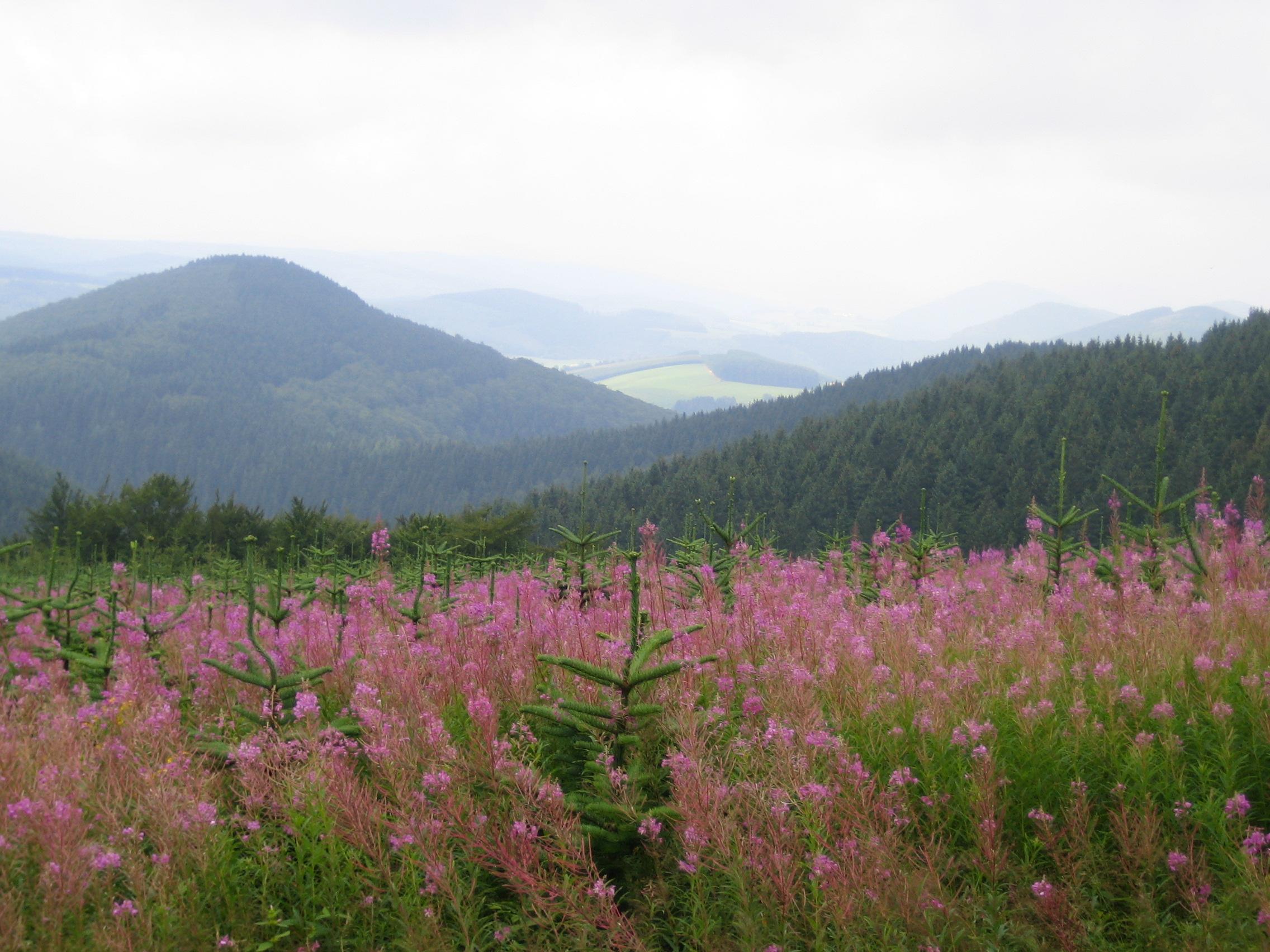 """Fernsicht ins Land der """"1000 Berge"""""""