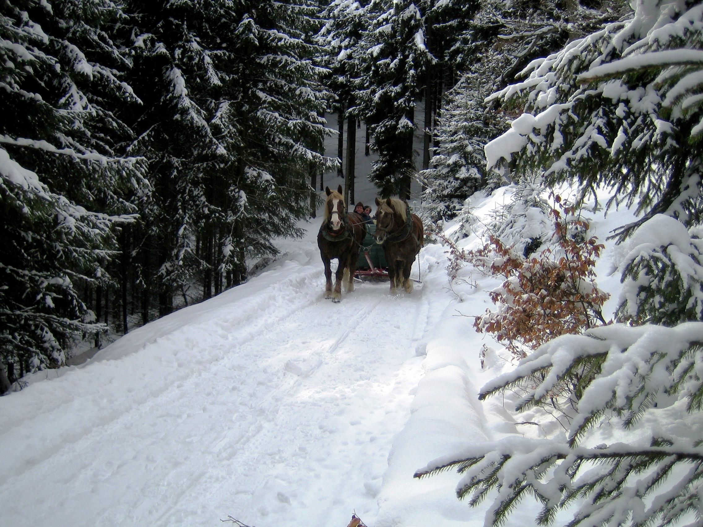 Pferdeschlittenfahrten rund um Liesen